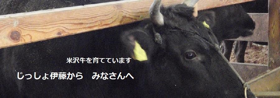 米沢牛生産者 伊藤精司 伊藤稲馬