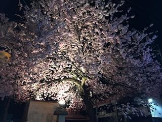 【貸し切り風呂付日帰りプラン】春の前菜盛り合わせ/