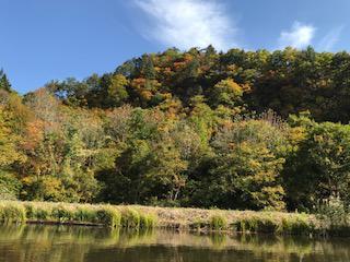 カヌーに乗り湖面から見上げる山形県飯豊町中津川地区の紅葉