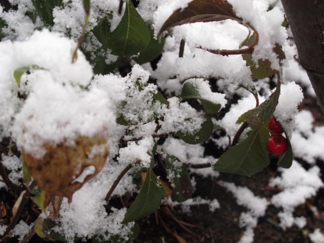 小さな初雪
