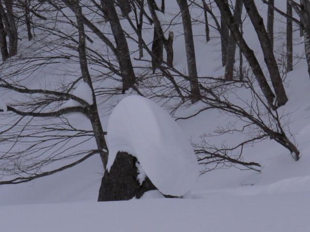 センタ-積雪