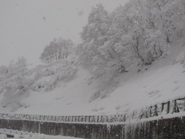八幡坂雪の花