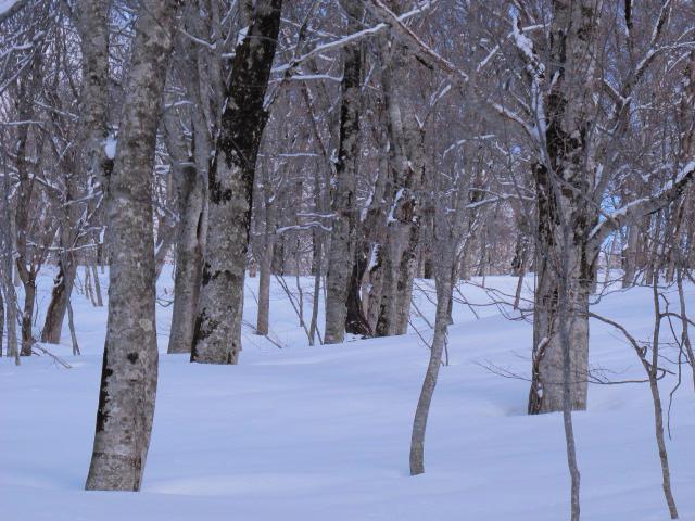 森の中へ 7