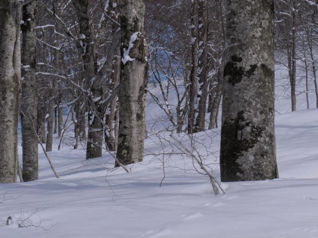 森の中へ 8