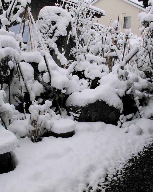 2017初の大雪