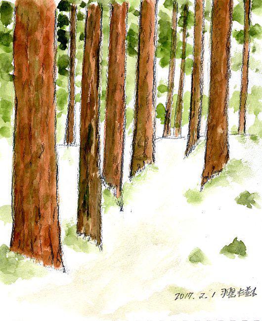 羽黒杉並木