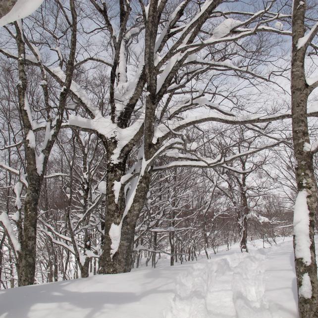 3月のブナの森