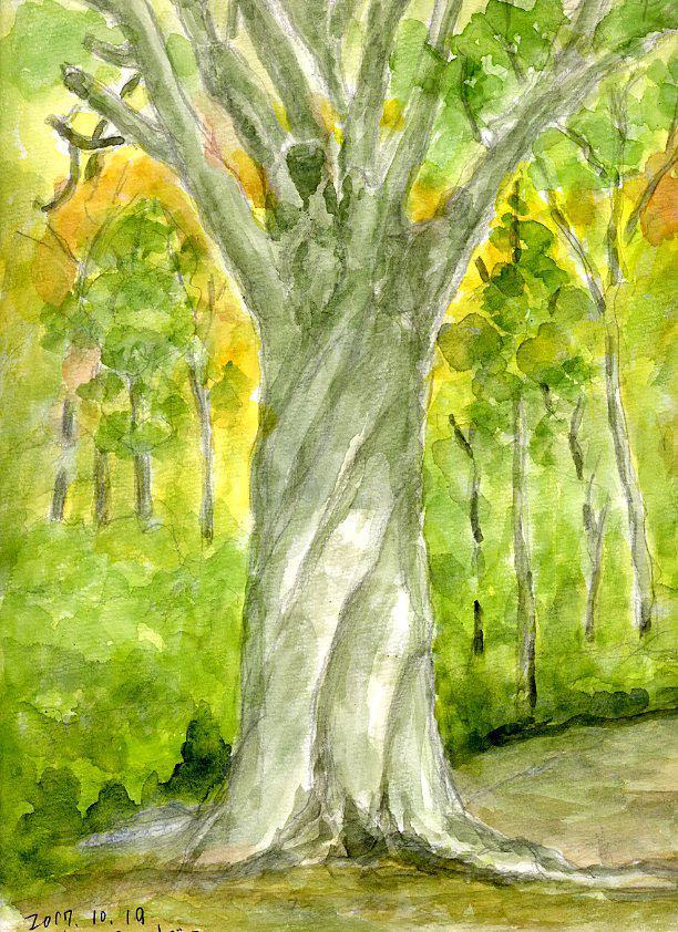 11月のブナ林