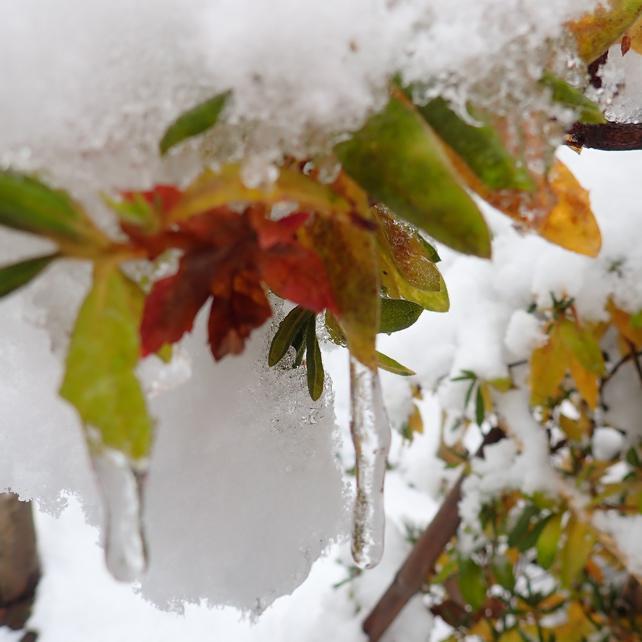 雪のある風景 B