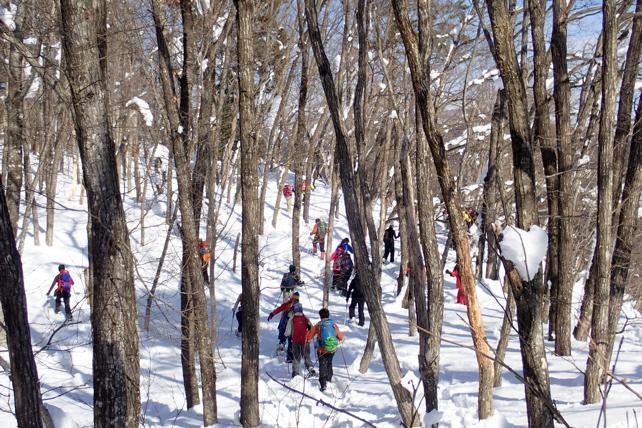 老木のナラ林