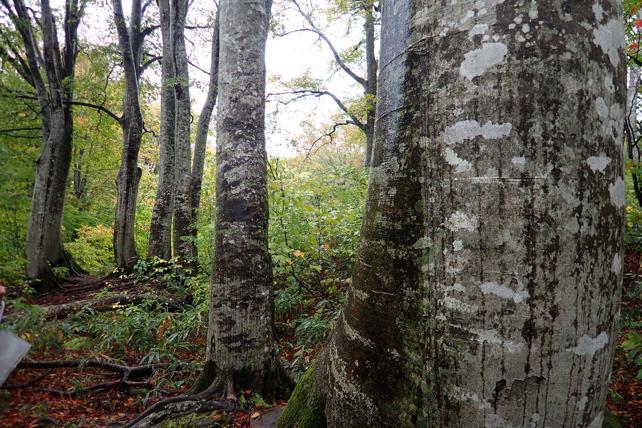 霧雨の中の原生林