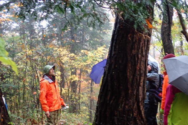 赤松、もみの木、コナラ、イヌブナ