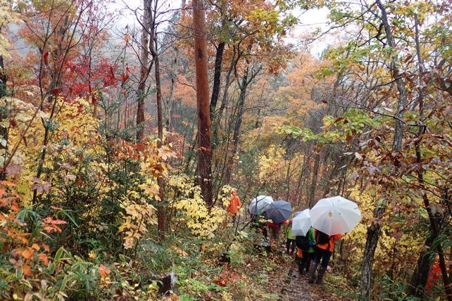 紅葉の森林公園