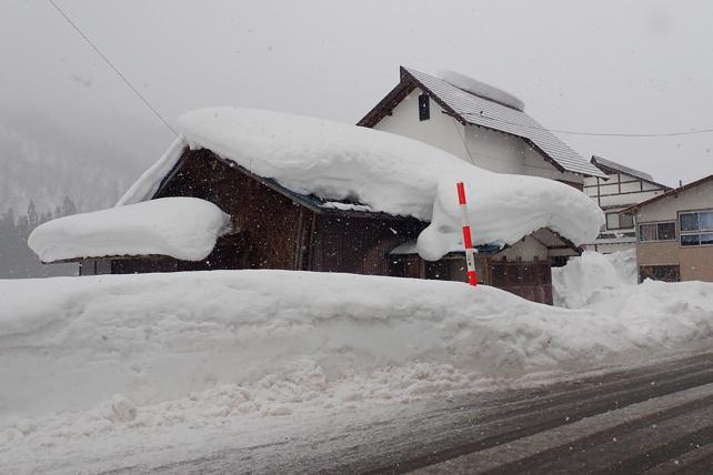 西川町大井沢深雪体験