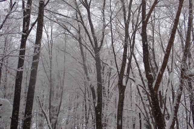 木々への着雪