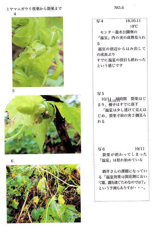 2018 ミヤマニガウリ NO.4