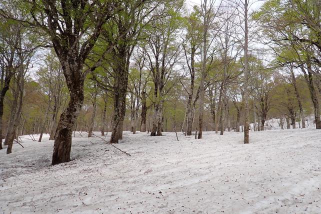 再度残雪最後の場所あたり