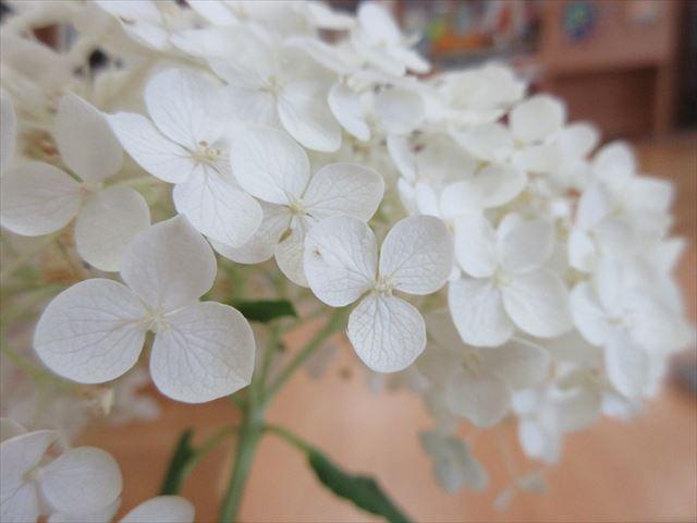 おやこ七夕会&給食参観 ( *´艸`):画像
