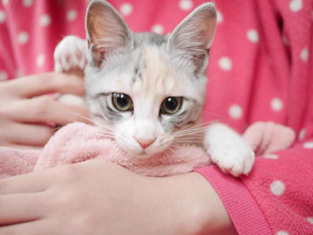●初めまして 当店の招き猫 にこです●:画像