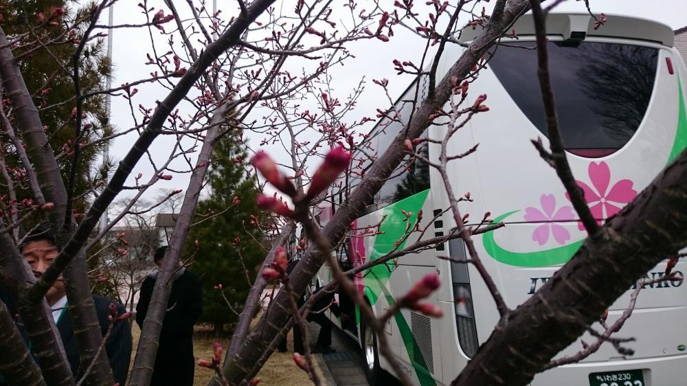 福島の仮設に花は芽吹きけり