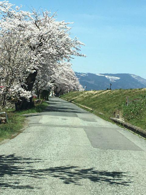 回顧…平成最後の桜です