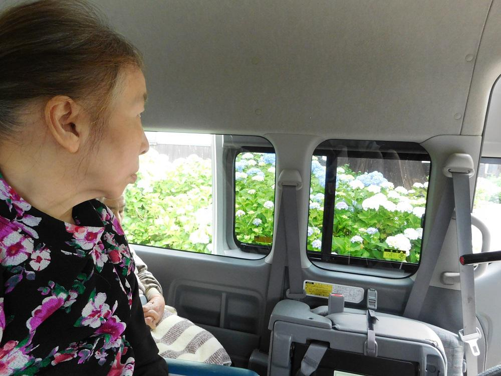 紫陽花ドライブ