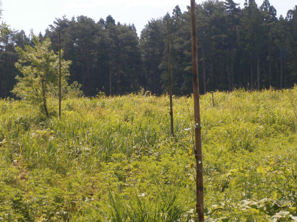 6月7日21世紀不伐の森へ