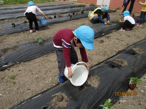 野菜の苗植え Part3