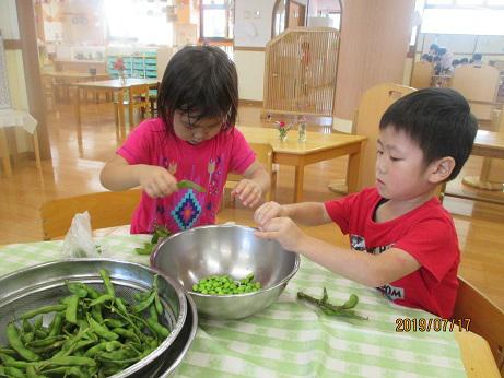 おいしい夏野菜 収穫!