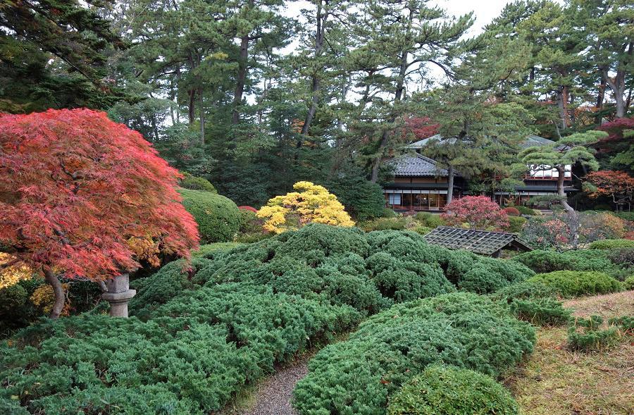 紅葉が見ごろを迎えています。