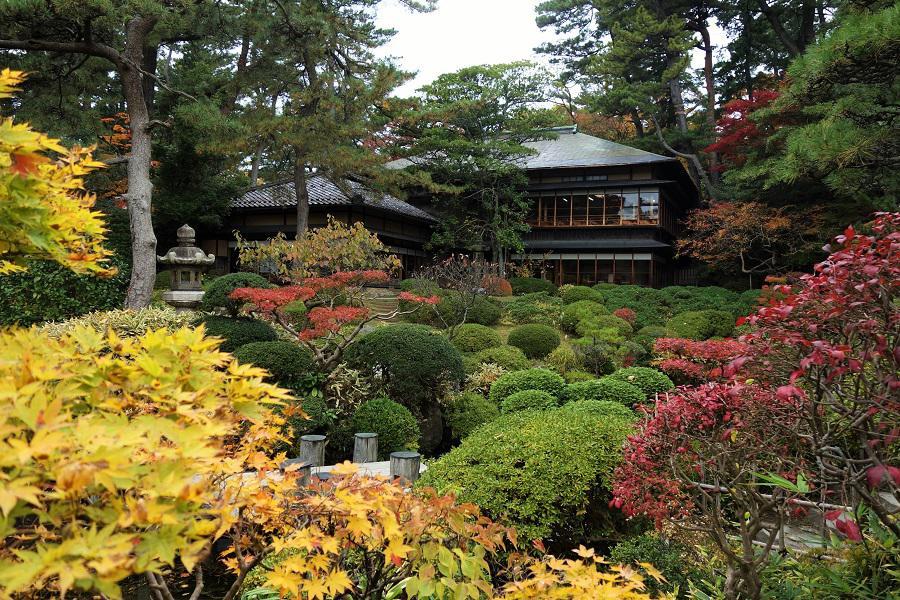 「鶴舞園」の紅葉。今が盛りです!!