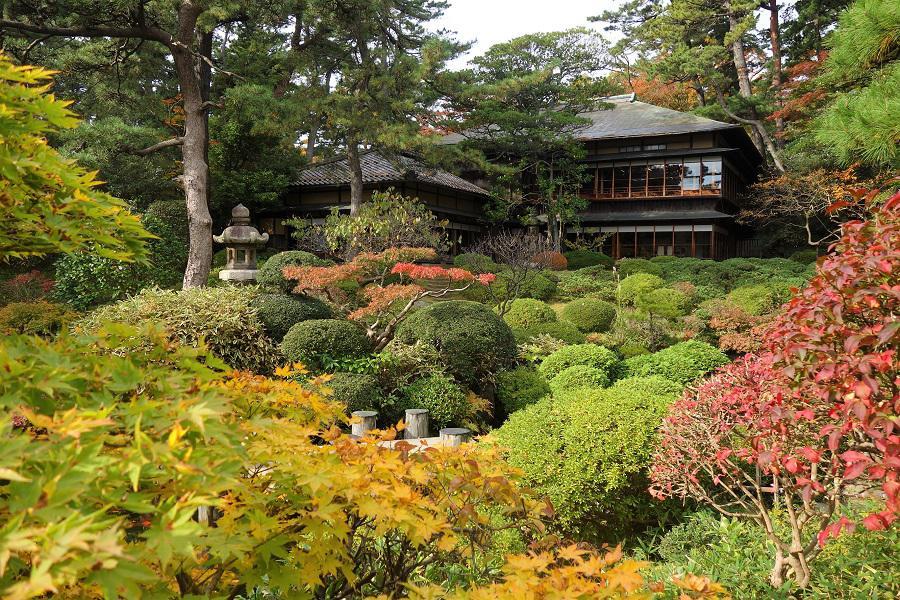 「鶴舞園」の紅葉が見ごろを迎えます