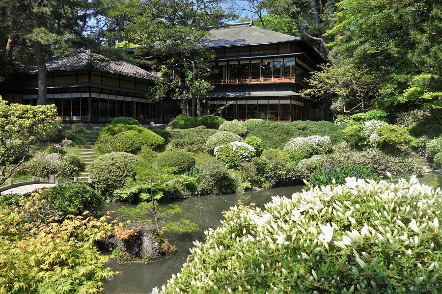 Azalea of Tsurumai garden has begun to bloom. : Image