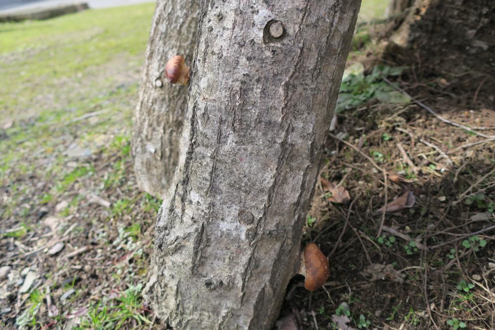 ご当地メニュー「蓮根の団子汁&小芋のころばし」