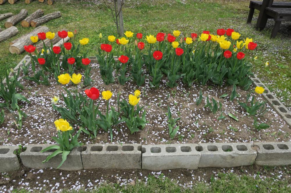 ♪春メニュー♪