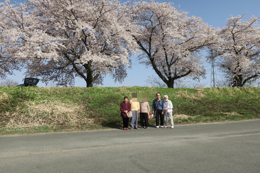 観桜ドライブ