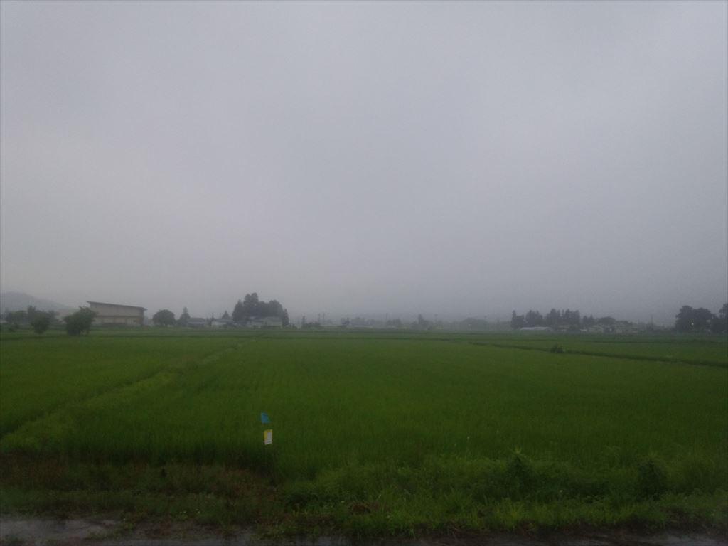 雨の中でも草刈り:画像