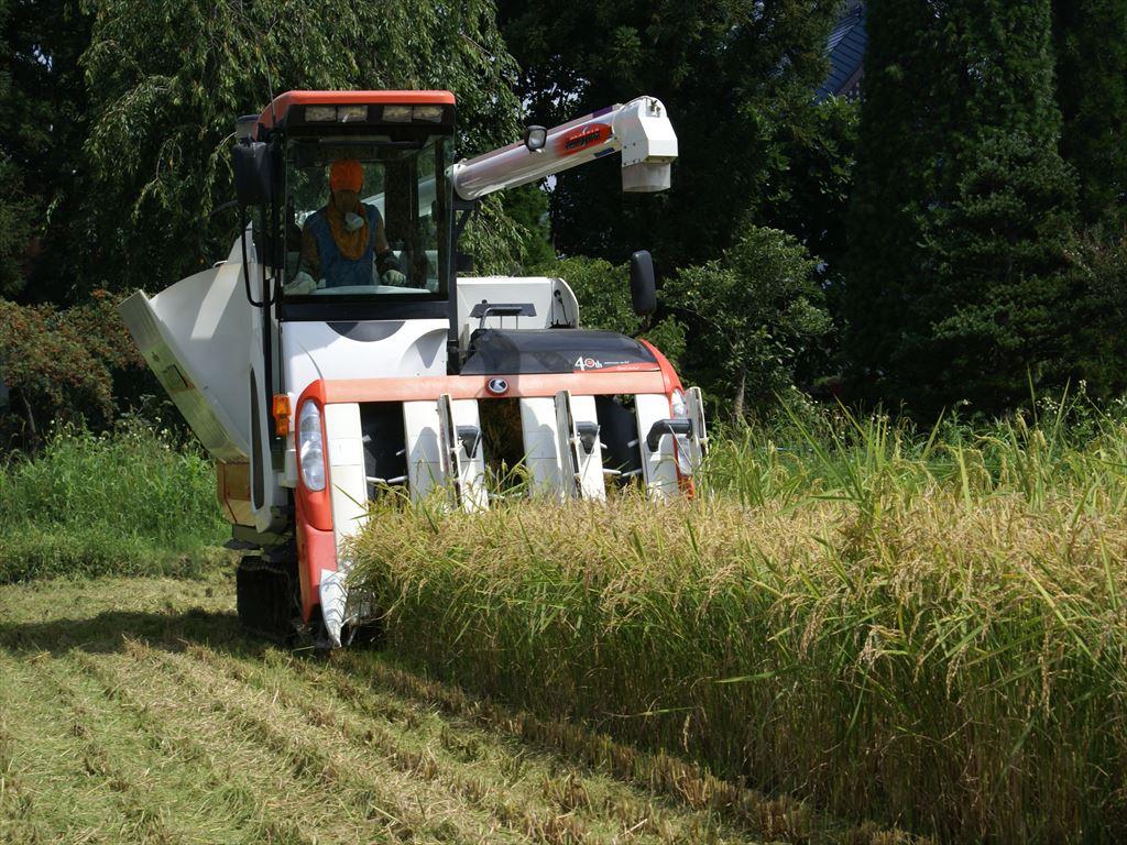 収穫開始:画像