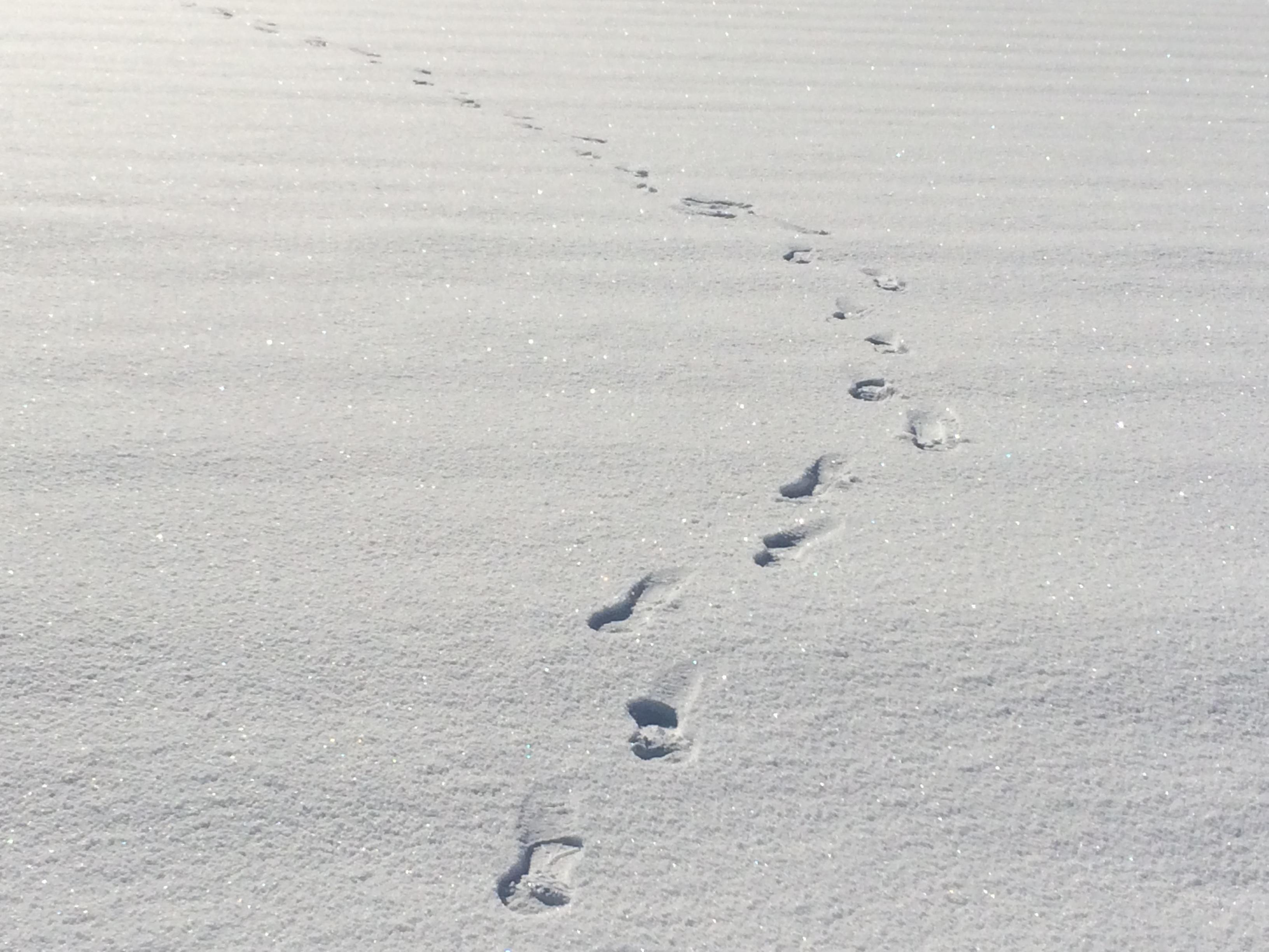 固雪わたり:画像
