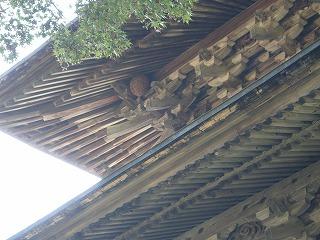 カメバチの巣を発見