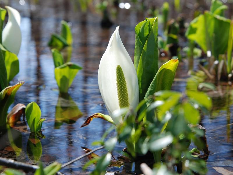 群生が抜群に美しい4月後半見頃の花!!