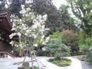 「庭処 平林造園」の画像