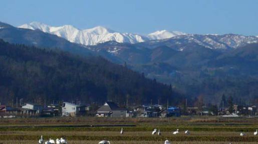2009/03/30 08:12/朝日連峰と白鳥の風景