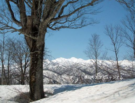 2011/04/15 22:51/【朝日町から見える大朝日岳VP33】22.サイヅチ峰