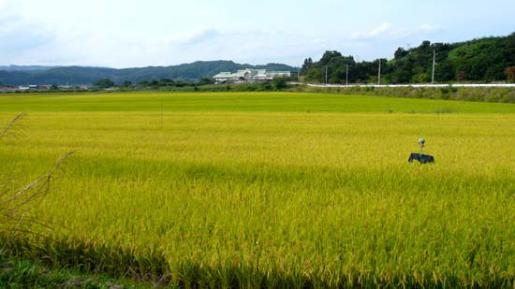 2014/08/19 10:50/二百十日の稲作について