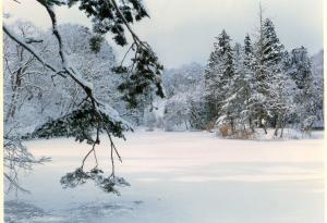 「2/23 冬の絶景 大沼の浮島を訪ねる〜あつあつひきずりうどん付き〜」の画像