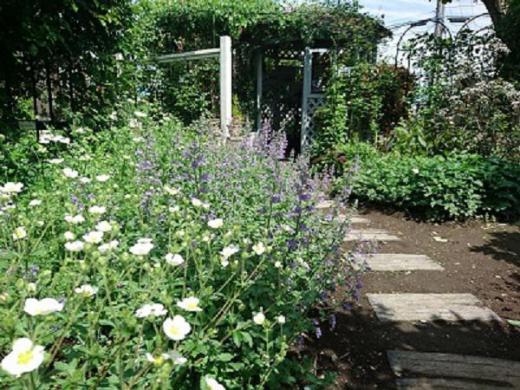 《バラ庭》ガーデンNOW〜・・今朝のバラ庭!!/