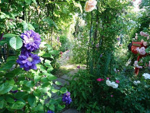 《バラ庭》オープンガーデン情報〜・・きょう、朝の庭一周!!/