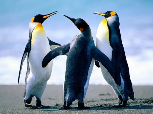 ペンギン/