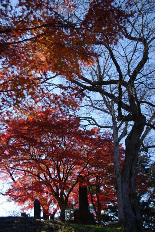 2011/11/11 09:25/烏帽子山は紅葉と落ち葉のジュータン